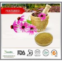 Herbal Supplement Echinacea Extrakt / 4% Polyphenole