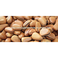 2017 pine nuts white pine nuts with high quality