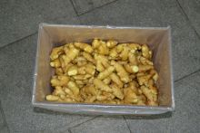 Hot sale new crop fresh ginger