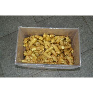 Vente chaude nouvelle récolte fraîches au gingembre