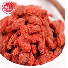 Anti-Aging Superfood Proteja as bagas orgânicas do goji da visão