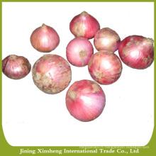 Prix chinois de l'oignon rouge frais