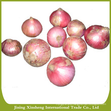 Supplier of fresh red onion