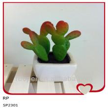 Plantas al aire libre al por mayor del cactus de Alibaba China con el pote