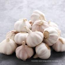 High Quality Normal White Garlic