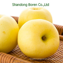 Fresh Golden Apple for Sale, China