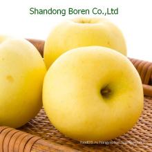 Свежее золотое яблоко для продажи, Китай