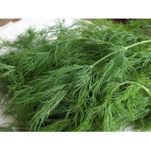 Fennel Extract Powder