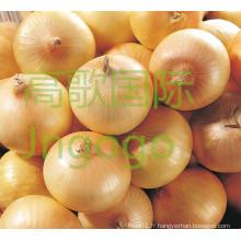 Frais chinois de bonne qualité Oignon jaune
