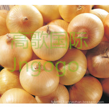 Chinese Fresh Good Quality Yellow Onion