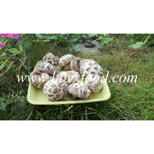 Cogumelo Shiitake de flor branca vegetal secada