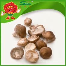 Champignons Shiitake frais aux champignons comestibles à vendre