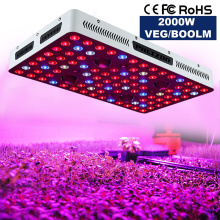 Big Promotion Phlizon 2000W COB Grow Light USA