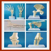 Modelo de seis articulações humanas, modelo anatômico médico