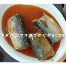 Sardines en conserve dans l'huile