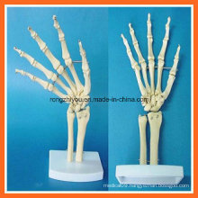 Human Anatomical Simulation Hand Joint Skeleton Model for Medical Teaching