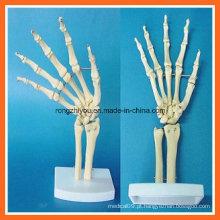 Modelo de esqueleto articular de simulação anatômica humana para ensino médico