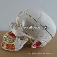 2013 расширенный человеческий череп с кровью