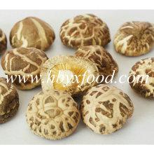 3-4cm Grade un champ de thé sec Shiitake Mushroom