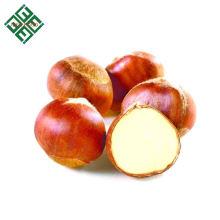castanha grande fresca no shell castanha doce fresca por atacado