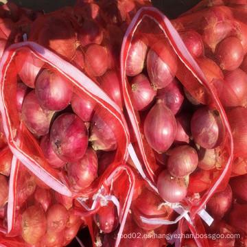 Nuevas Cebollas Frescas de Chalotas Frescas