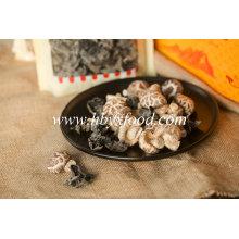 Légumes sains 3-4cm Thin Flower Mushroom