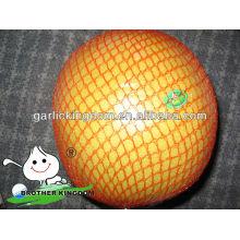 Neue Ernte frische Pomelo Früchte