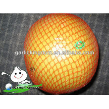 new crop fresh pomelo fruit