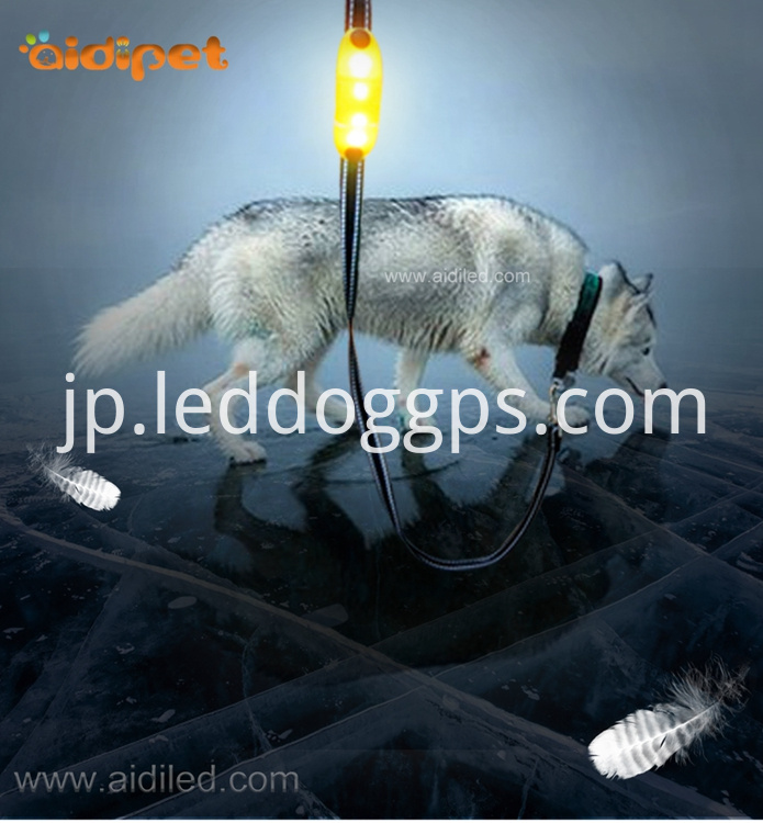 Led Night Safety Dog Leash
