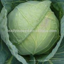 C08 Xiaguang maturidade precoce resistente ao calor 60 dias sementes de repolho híbrido