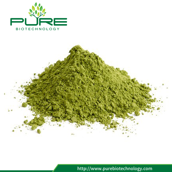 Freeze Dried Moringa Leaf Extract (3)