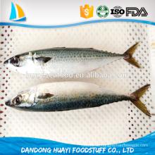 Beste Qualität Meeresfrüchte Fisch gefroren leckere leckere Pazifik Makrele