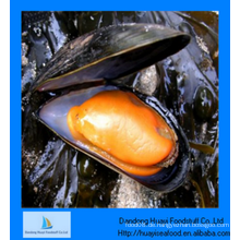 Gefrorene gute Qualität halb Muschel Produkte