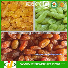 Import dried fruit for Grapes
