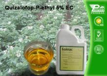Quizalofop-P-Ethyl 5% EC Grass Selective Herbicides Strong