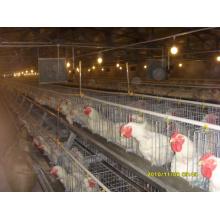 Automatique une maison de poulet de type Cage avec des cages et des équipements