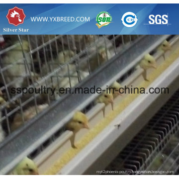 Automatic H Type Broiler Cage