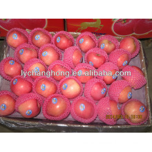 apple fruit price