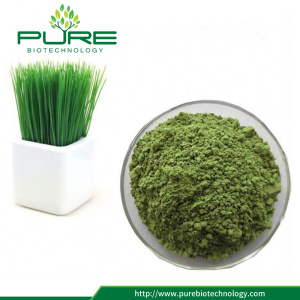 Organic Wheatgrass Powder For Dietary Supplement
