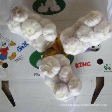 Fournisseur fiable d'ail blanc frais chinois emballé en 500g X 20 / carton