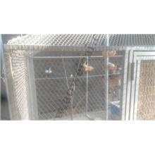 Volière Mesh - Maille en corde d'acier inoxydable Accueil des oiseaux