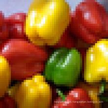 Pimienta de colores / pimiento verde