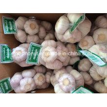 Nouvelle saison Ail frais chinois blanc blanc et blanc pur