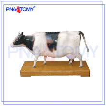 PNT-AM43 Cattle Acupuncture Modelo modelo anatômico animal