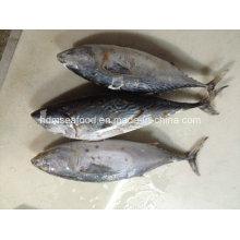 Замороженная рыба-бонито большого размера