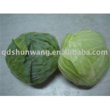2011 chinese fresh round green cabbage