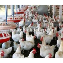 Equipos completos de aves de corral para aves de corral para pollo de engorde