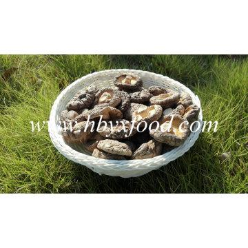 No Pollution Shiitake séché bio champignon séché