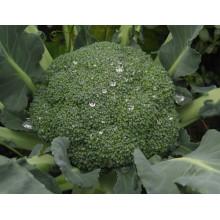 HBR01 Senmin жаропрочное гибридные семена F1 брокколи