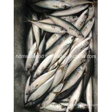 Fresh Slimy Mackerel Fish